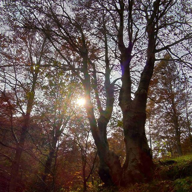 M'illumino di foresta